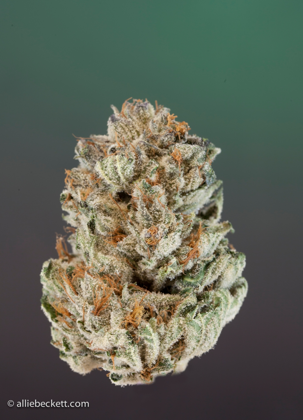 fire_alien_og0408-Edit