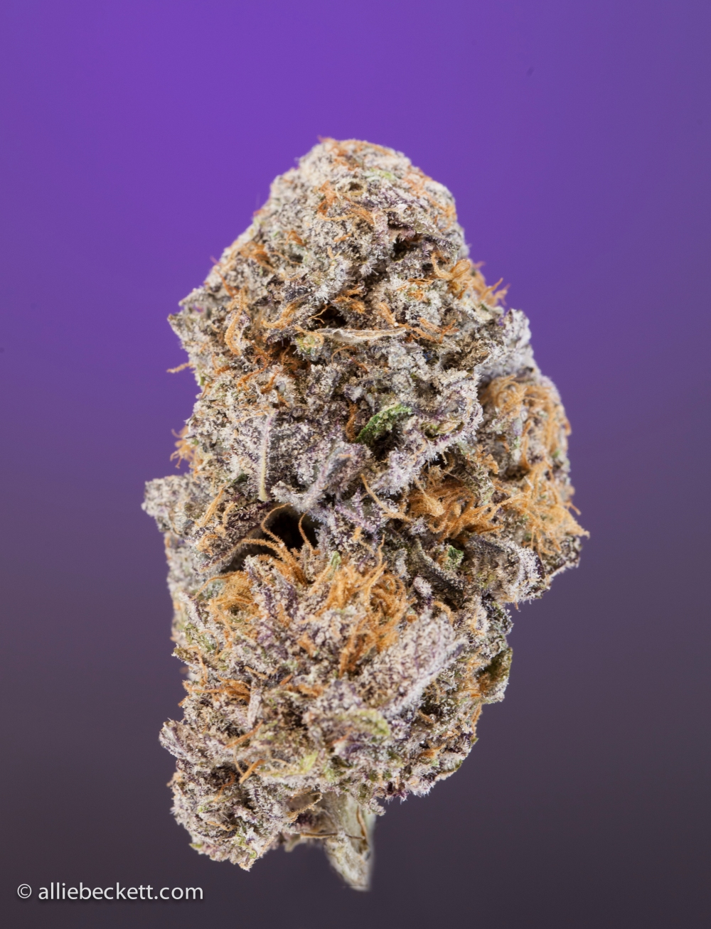 purple_kush0434-Edit