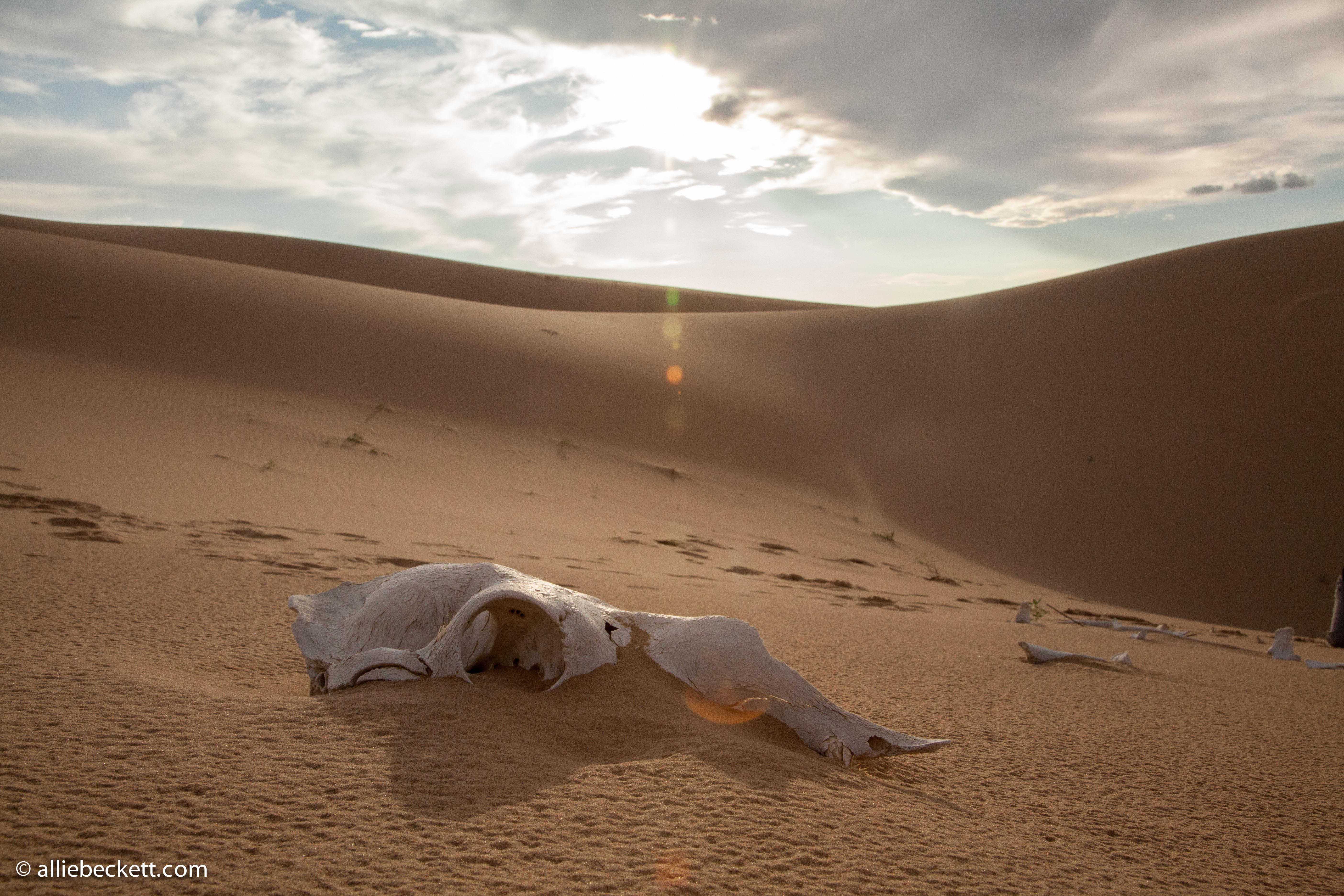 Gobi Desert | Canna Obscura